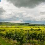 Wein und Wetter in Rheinhessen
