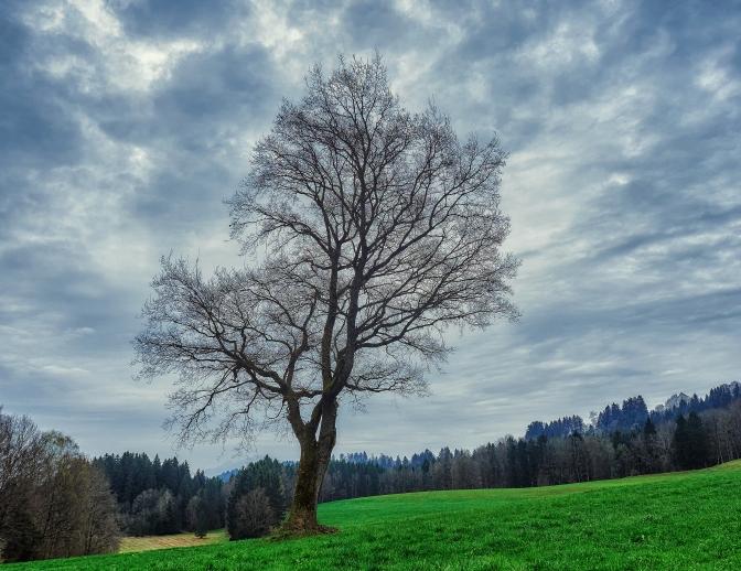 PS April und Ammergau 248248Apr 10 2017