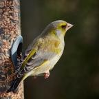 An der Fütterung oder Vogelflug im Highspeed